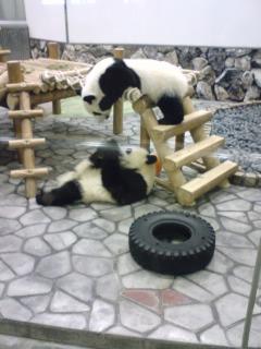 そしてパンダ
